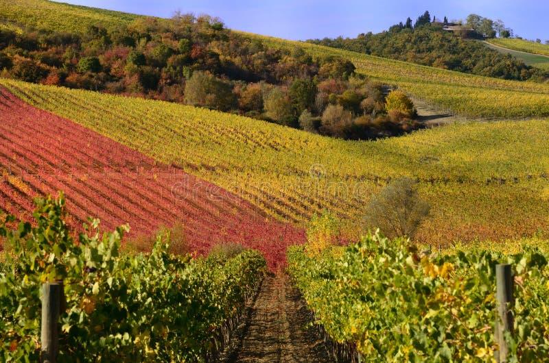 виноградники осени стоковое фото