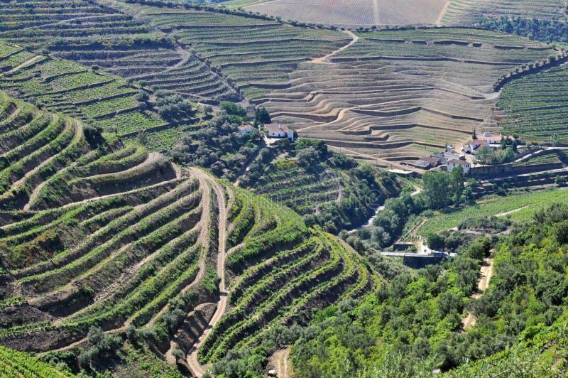 виноградники Португалии douro стоковые изображения rf