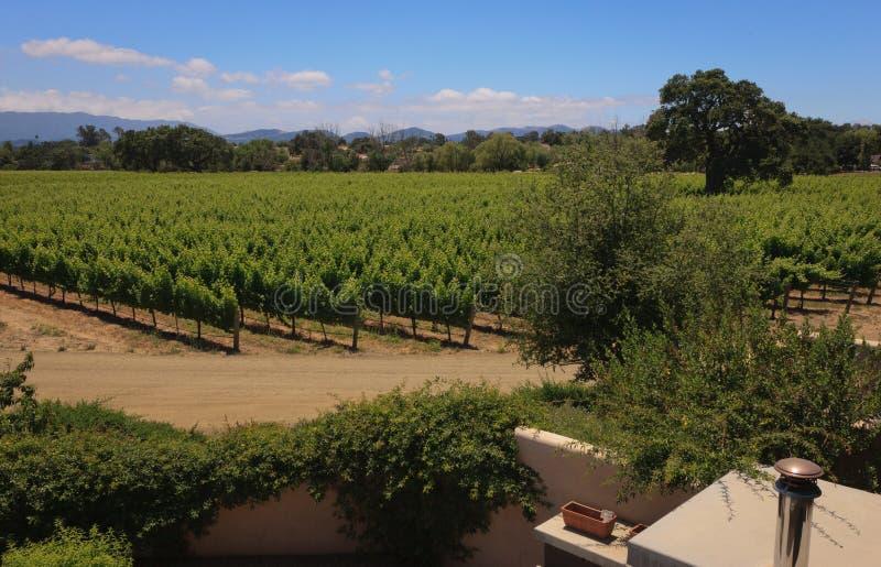 виноградники свободного полета california центральные стоковая фотография