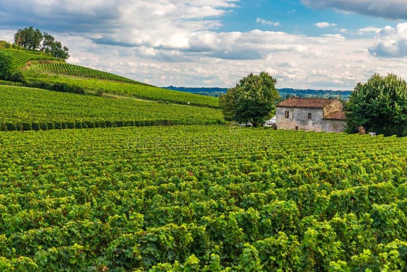 Виноградники Святого Emilion, Бордо Wineyards во Франции стоковое изображение rf