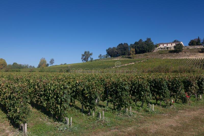 виноградники святой emilion стоковое изображение rf