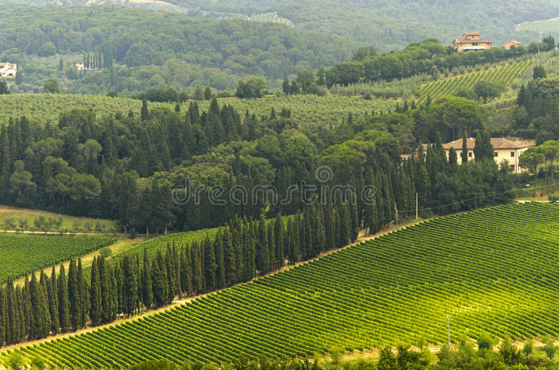 виноградники Тосканы chianti стоковые фото