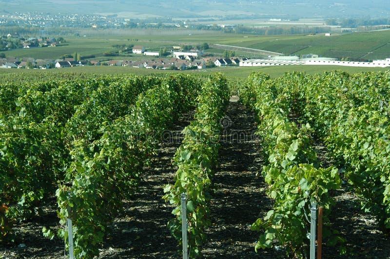 виноградники шампанского стоковое фото rf