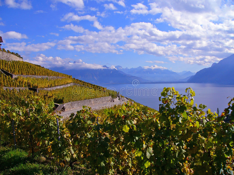 виноградники automn стоковое изображение