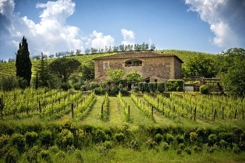 Виноградники Chianti в Тоскане, Италии стоковая фотография rf