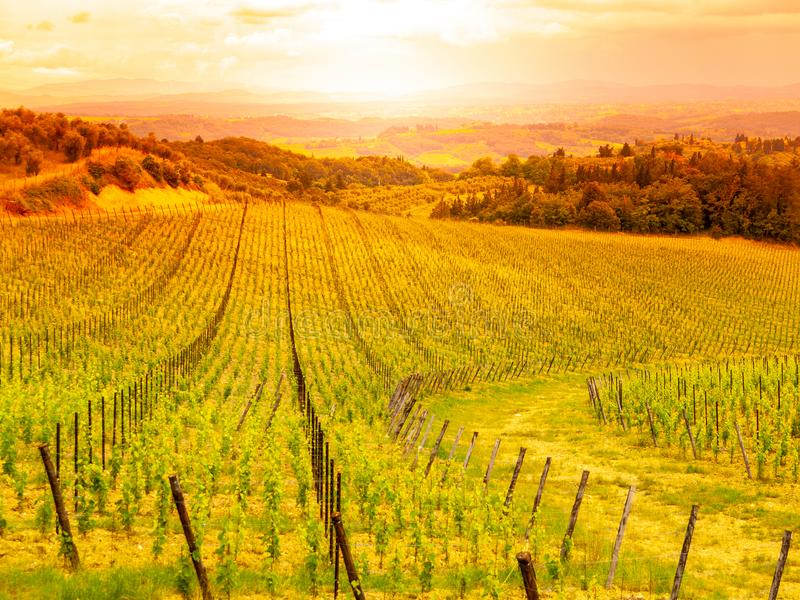 Виноградники Chianti Теплый заход солнца в красивом тосканском ландшафте, Италии стоковые фото