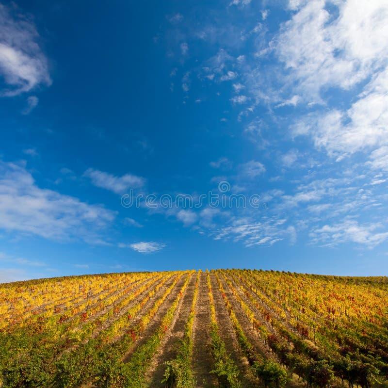 виноградники douro стоковые изображения