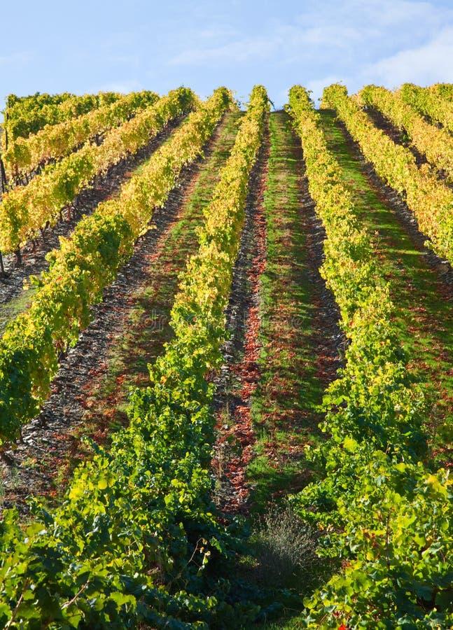 виноградники douro стоковые фотографии rf