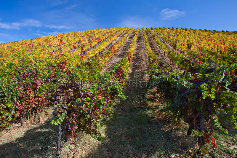 виноградники douro стоковое фото