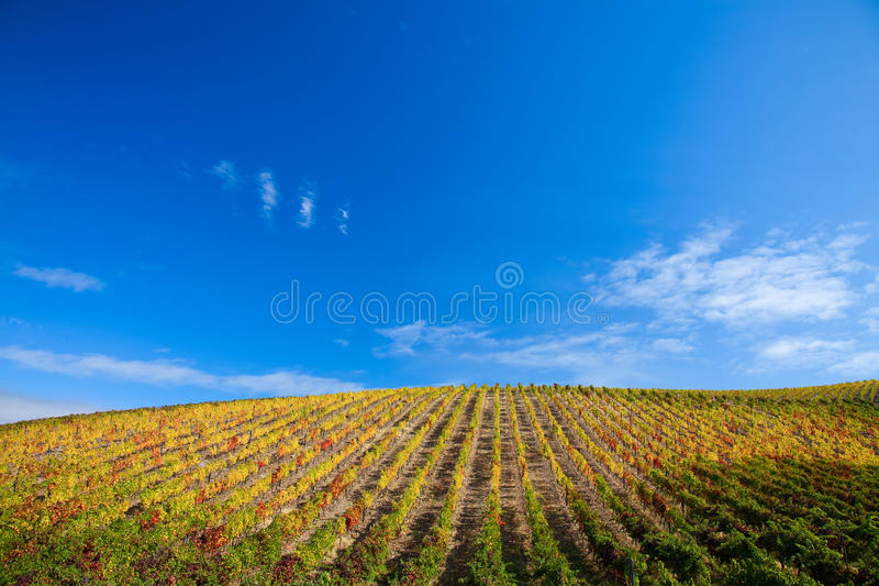 виноградники douro стоковое фото rf
