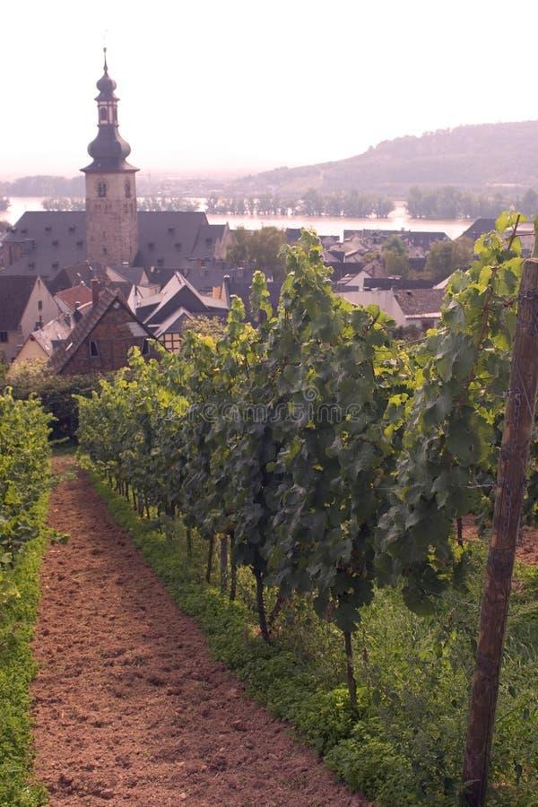 виноградники rudesheim стоковая фотография rf