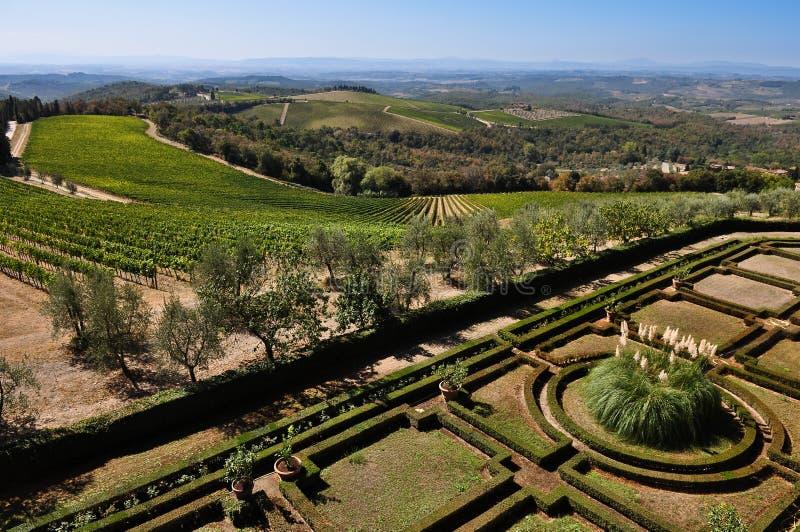 виноградники tuscan оливковых дерев стоковые фотографии rf