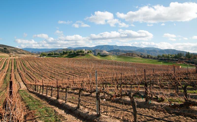 Виноградник в зоне вина Калифорнии растущей в США стоковая фотография
