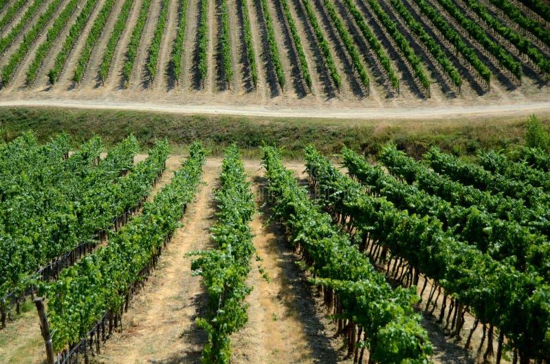 Виноградник в Тоскане стоковые изображения rf