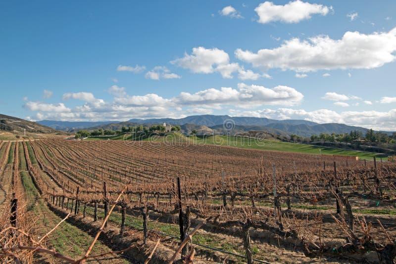 Виноградник в Temecula в южной Калифорнии США стоковая фотография rf