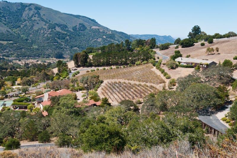 виноградник горного склона стоковые изображения rf