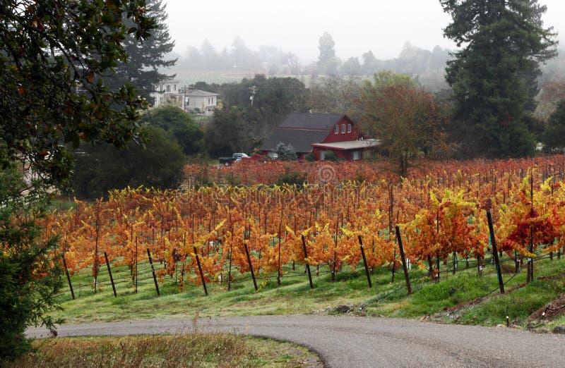 Виноградник горящий стоковые фотографии rf