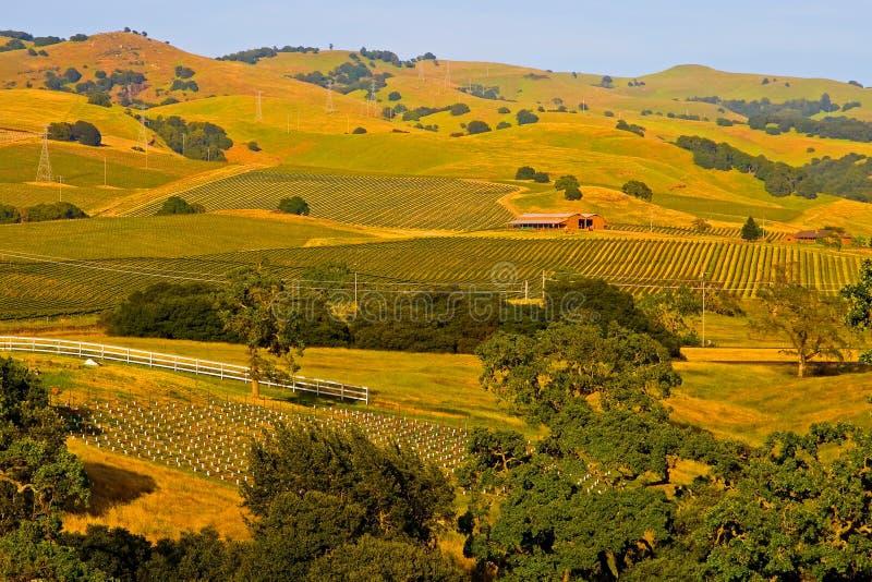 виноградник долины захода солнца napa стоковое изображение rf