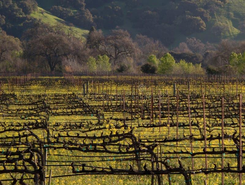 виноградник долины napa стоковая фотография