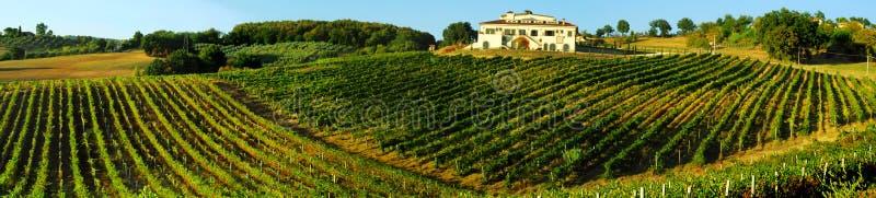 виноградник Италии стоковая фотография