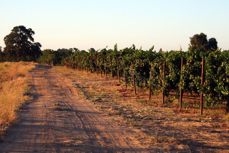 виноградник края стоковые изображения rf