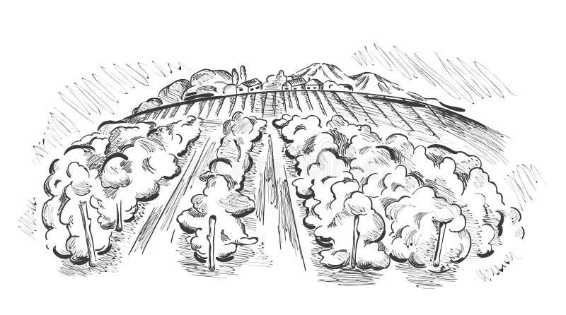 виноградник ландшафта бесплатная иллюстрация