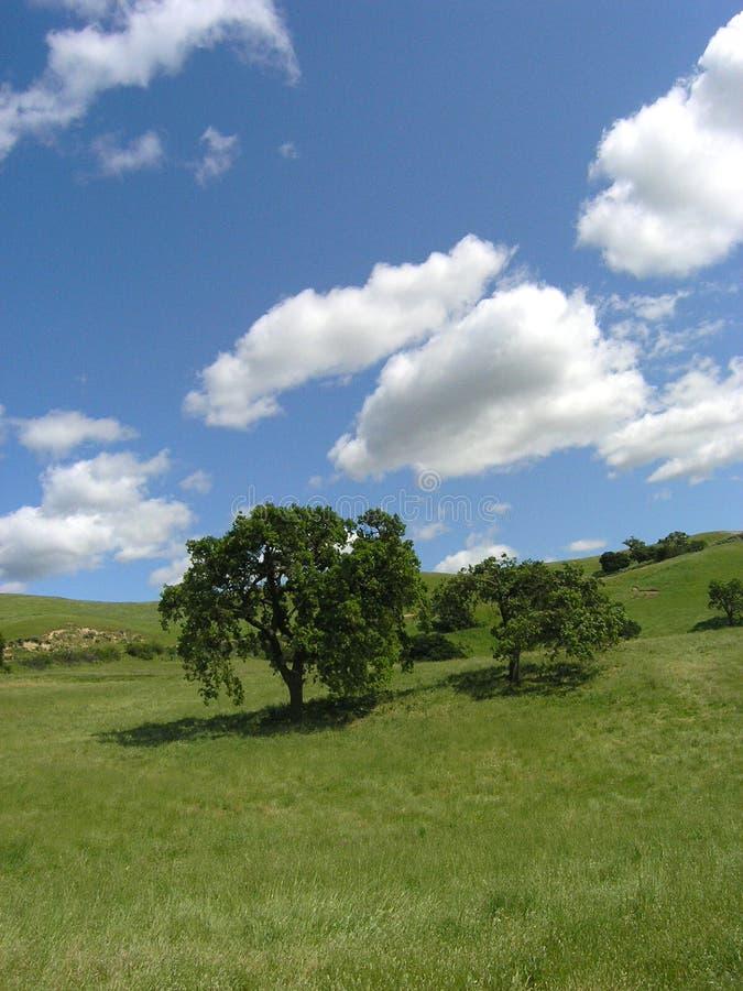 виноградник ландшафта firestone 2 стоковое изображение