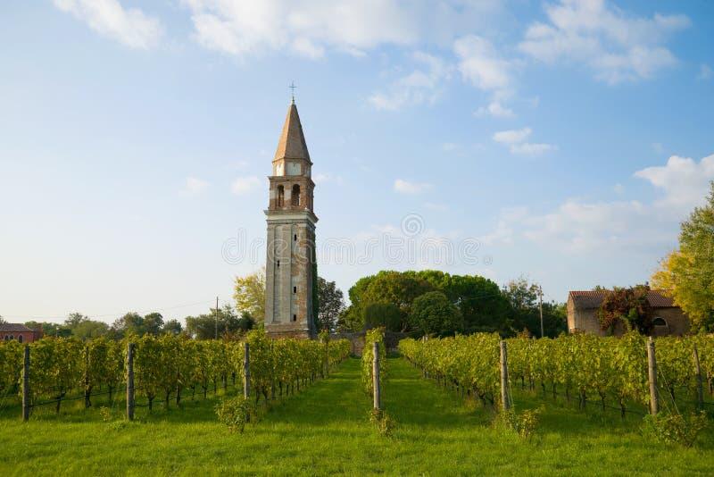 Виноградник на предпосылке старой колокольни Остров Mazzorbo, Венеция стоковая фотография