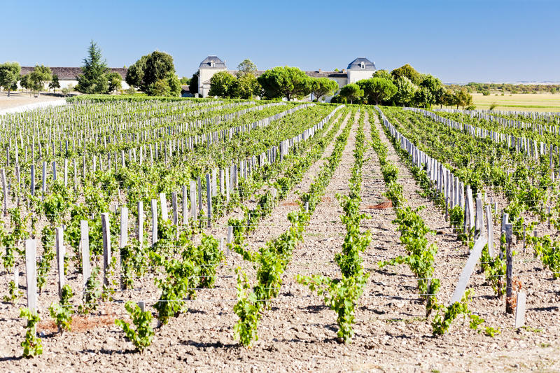 виноградник области Бордо стоковая фотография rf
