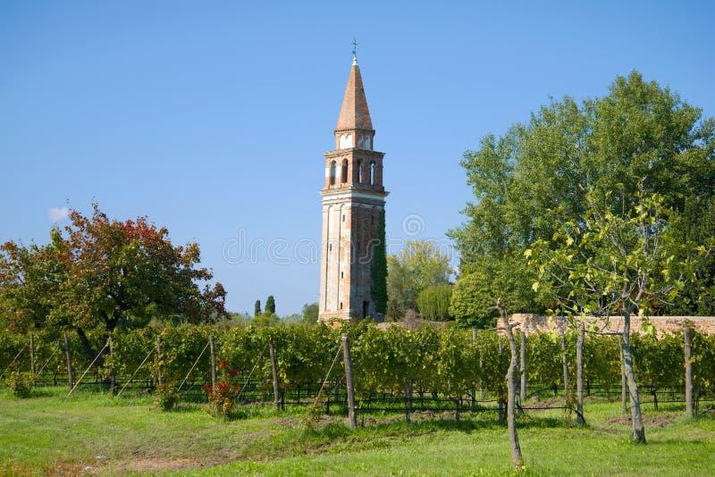 Виноградник около старой колокольни на острове Mazzorbo на солнечном после полудня Венеция Италия стоковые фотографии rf