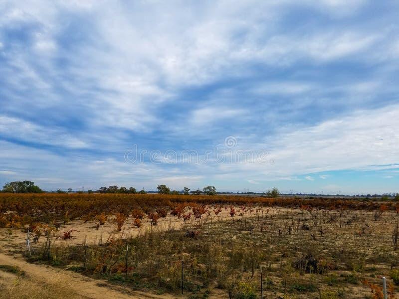 Виноградник падения стоковые изображения