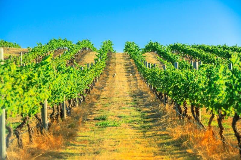 Виноградник реки Маргарета стоковые изображения