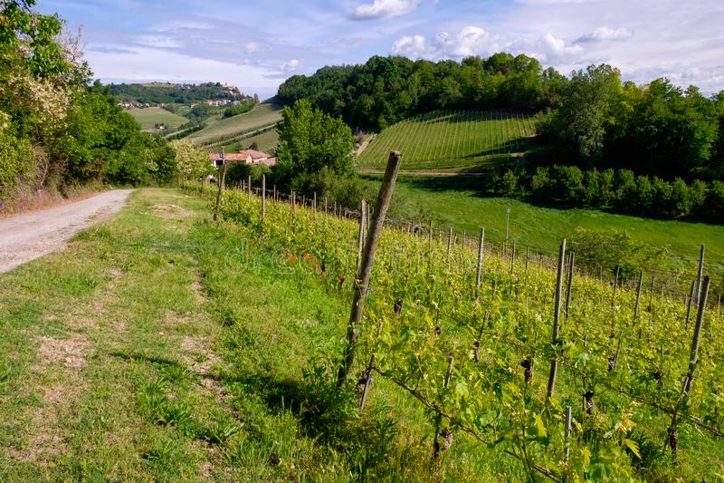 Виноградник с деревней d'Alba Monforte Тропа от Barolo стоковое фото