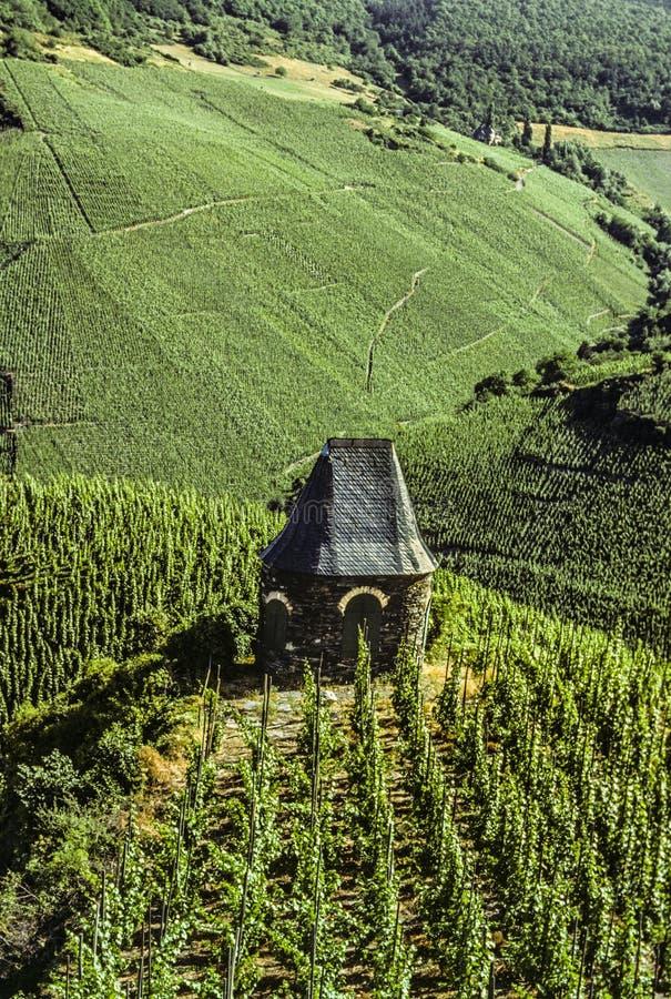 Виноградник с небольшим старым каменным зданием стоковые изображения