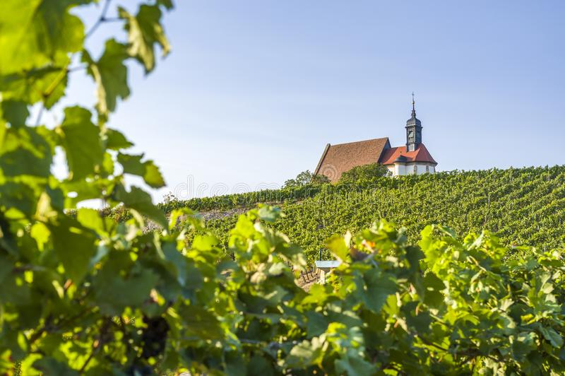 Виноградник, церковь Мария паломничества в винограднике и голубое небо в солнечности около городка Volkach, обрамленного виноград стоковые фотографии rf