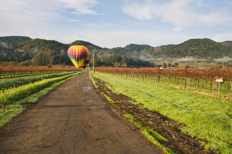 виноградник стоковые фотографии rf