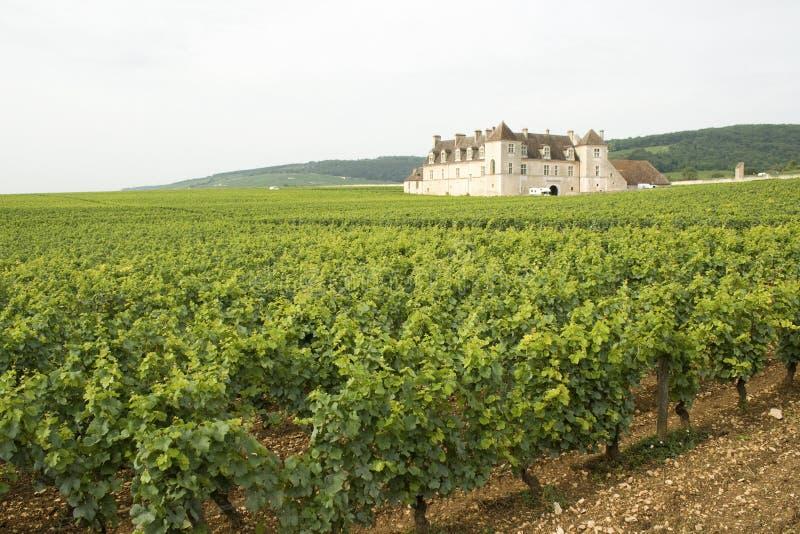 виноградник bourgogne burgundy стоковые фото