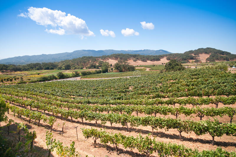 виноградник napa california стоковые изображения rf