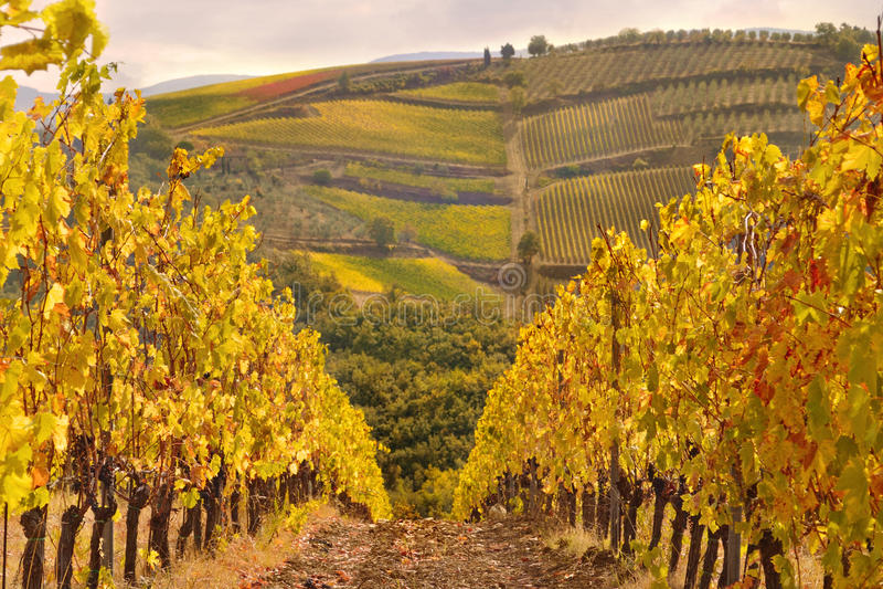 виноградник tuscan ландшафта chianti типичный стоковое фото