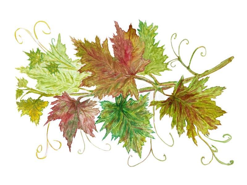 Виноградное вино, иллюстрация акварели на белой предпосылке иллюстрация вектора