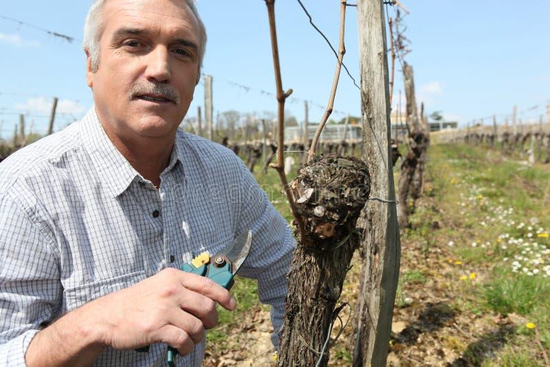 виноградные вина укомплектовывают личным составом подрезать стоковое фото rf