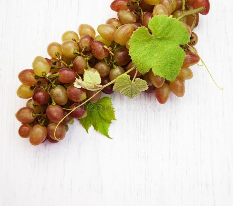 Виноградина с листьями стоковые фотографии rf