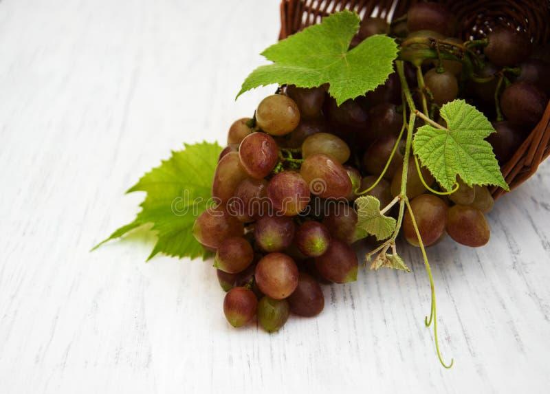 Виноградина с листьями стоковое фото
