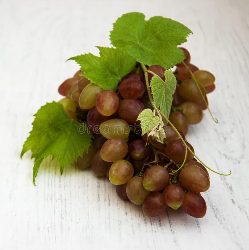 Виноградина с листьями стоковая фотография rf