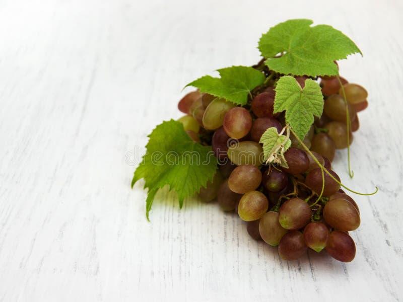 Виноградина с листьями стоковые фото