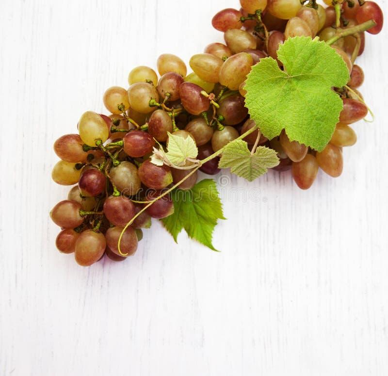 Виноградина с листьями стоковая фотография