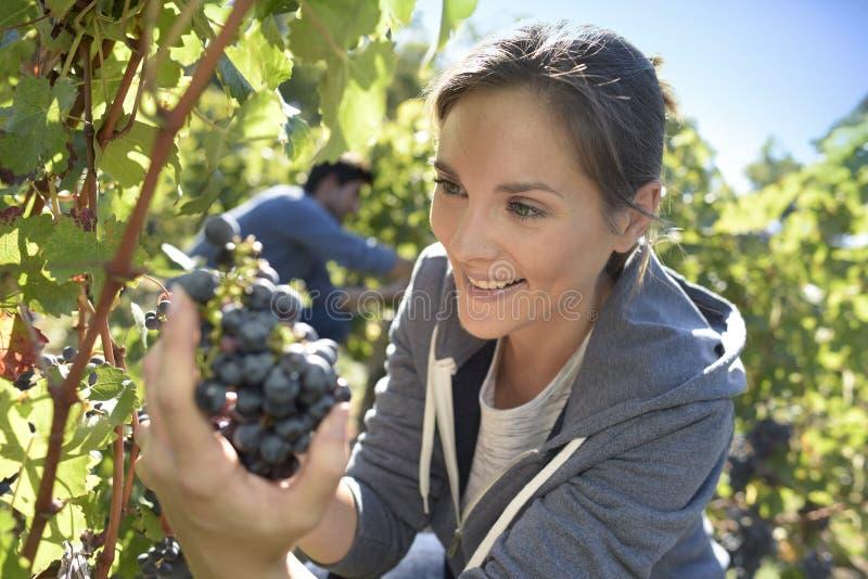Виноградины вырезывания молодой женщины стоковая фотография rf