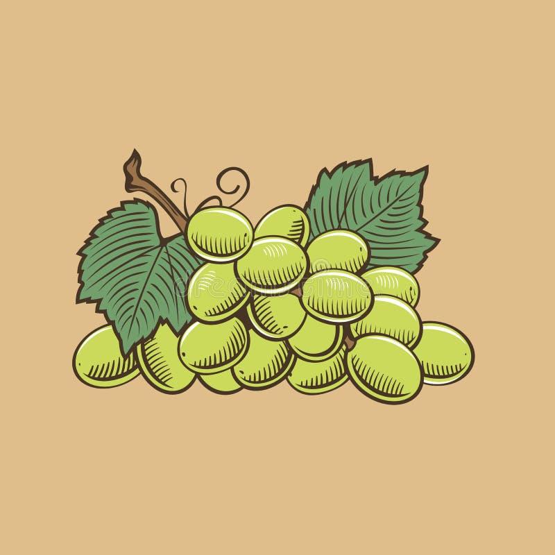 Виноградины в винтажном стиле Покрашенная иллюстрация вектора иллюстрация вектора