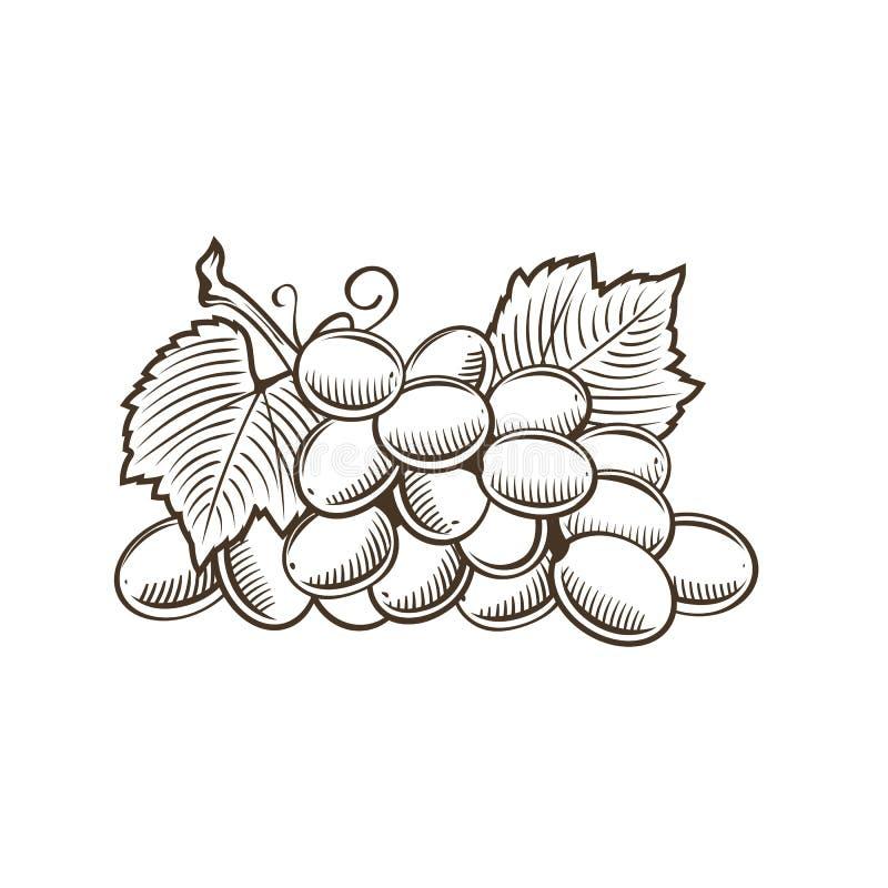 Виноградины в винтажном стиле иллюстрация вектора