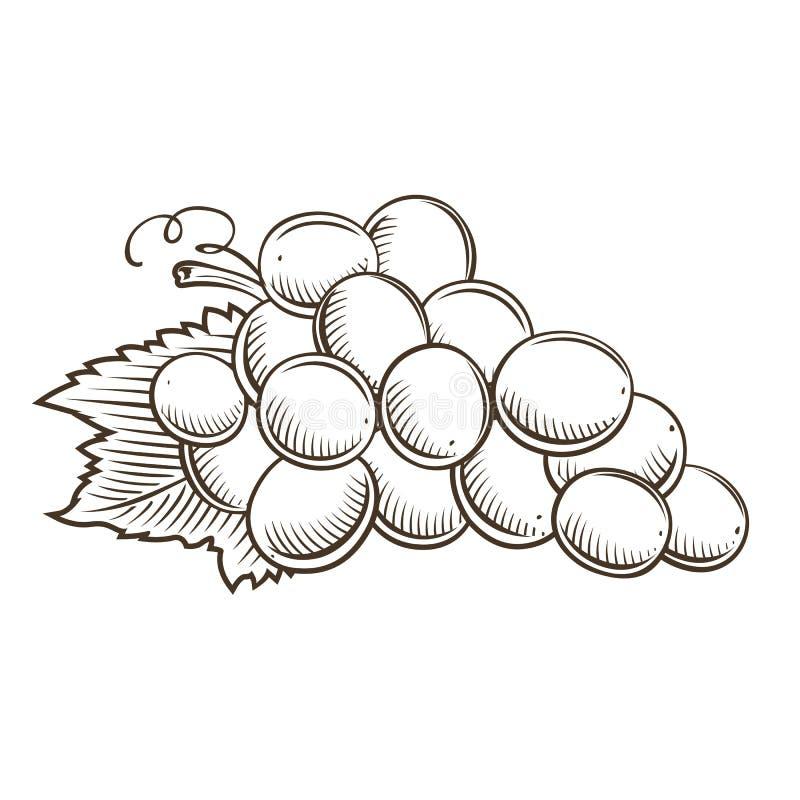 Виноградины в винтажном стиле иллюстрация штока